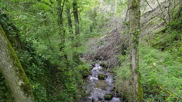 Das Arboretum
