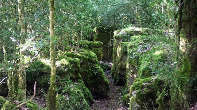 Das grüne Labyrinth