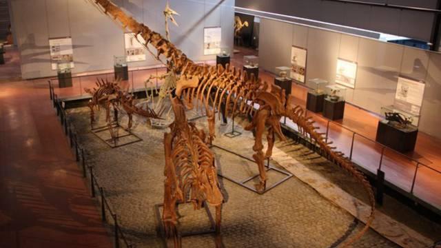 Das Dinosaurier-Museum