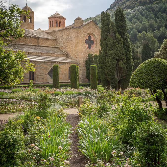 La roseraie de l'abbaye de Fontfroide